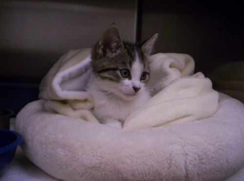 """Our little patient – """"David Puddy"""""""