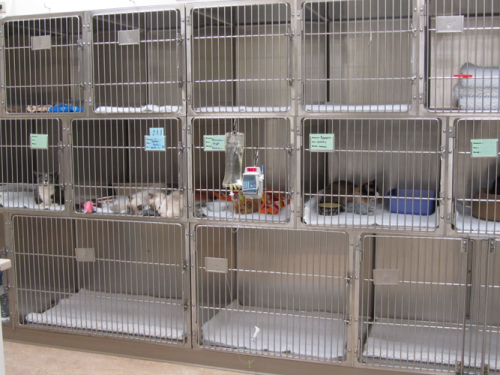 Treatment Kennels